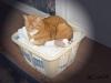Comfy Cat