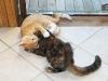 Kittens Wrestling 1