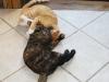 Kittens Wrestling 2